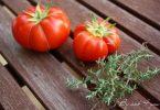 Verrine à la tomate et au saumon