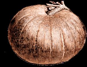 free vintage digital stamp pumpkin image