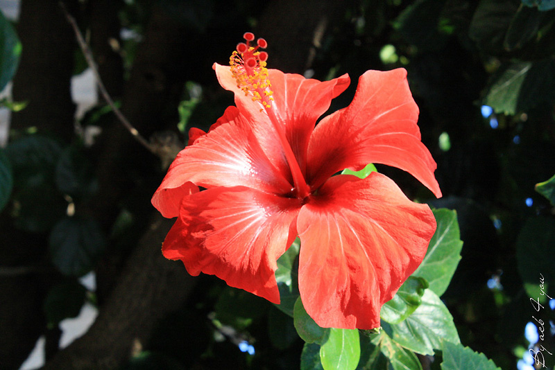 Album de voyage [part 3] : Pantelleria épisode 4 (fin)