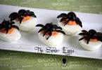 The spider eggs