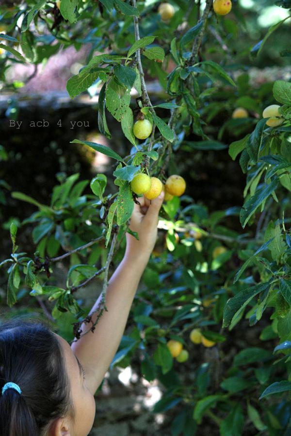 Tarte rustique pommes et mirabelles