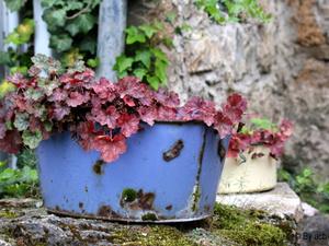 Bruschetta aux fleurs d'ail des ours