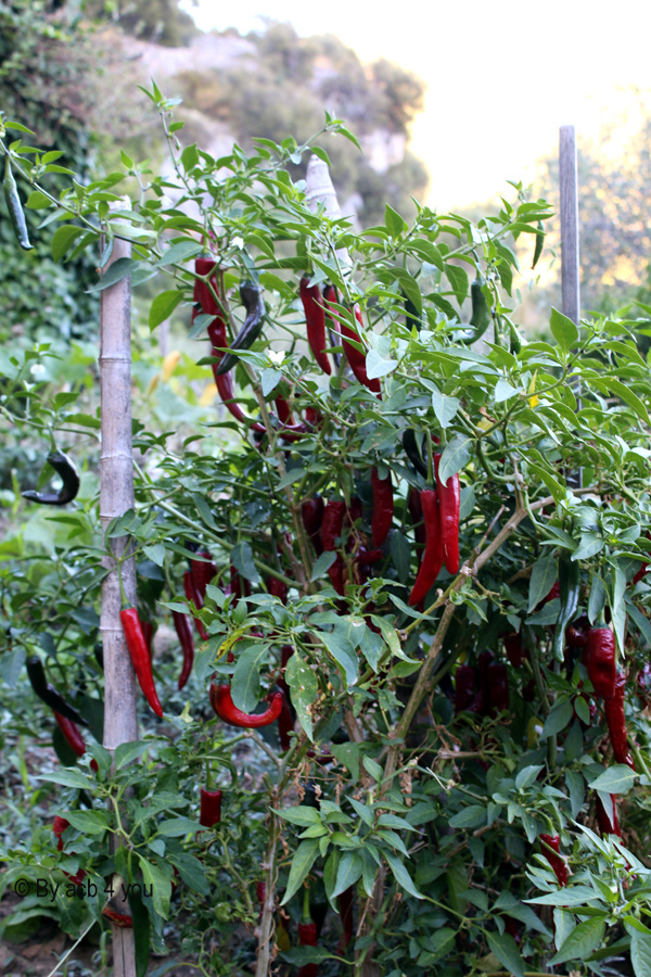 Tarte couronne aux tomates, mozzarella et herbes fraîches