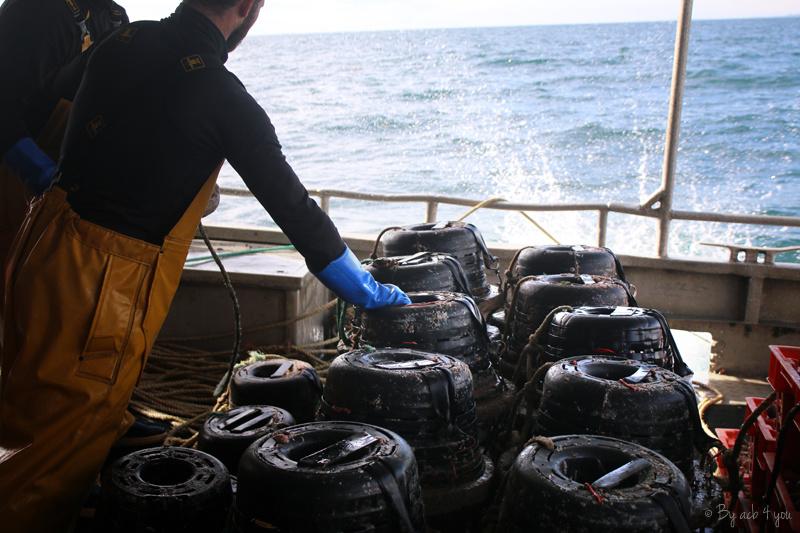 A la découverte du bulot de la baie de Granville et du label MSC