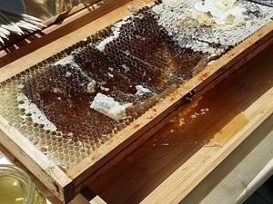 Présentation presse des miels Martine