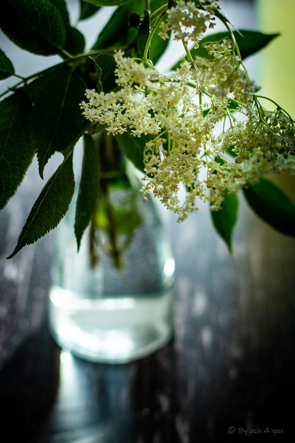 Kéfir aux fleurs de sureau